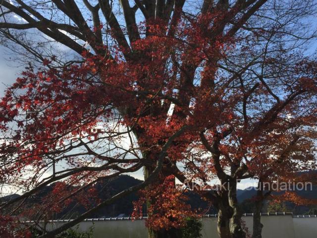 美術館庭園の紅葉